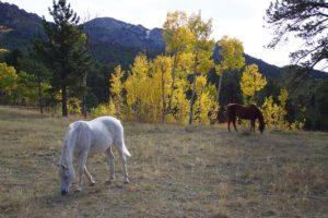 horses-1807490_640